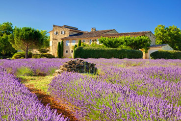 Luxury Real Estate For Sale In Provence. Renovated Farm U0026 Country Houses ...