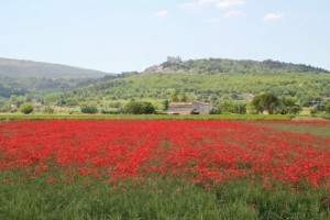 Experience Provence France