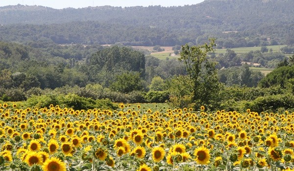 The Best Time to Visit Provence