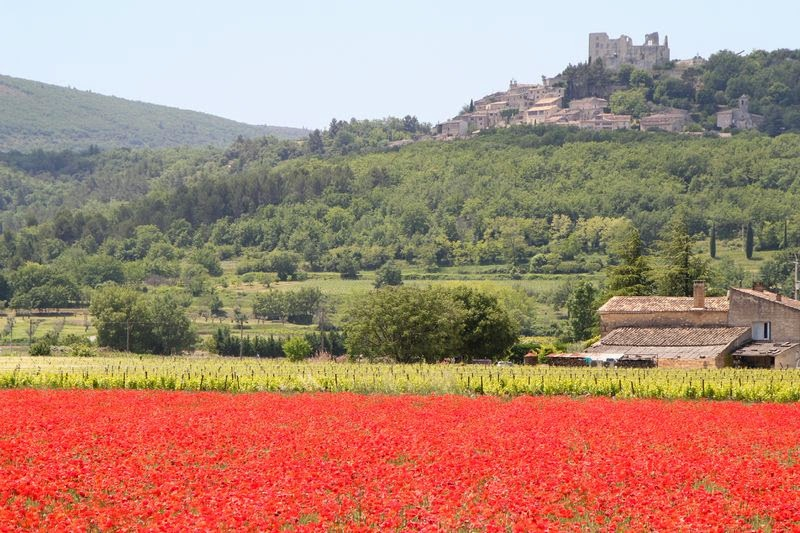 Provence Flowers poppies and lacoste