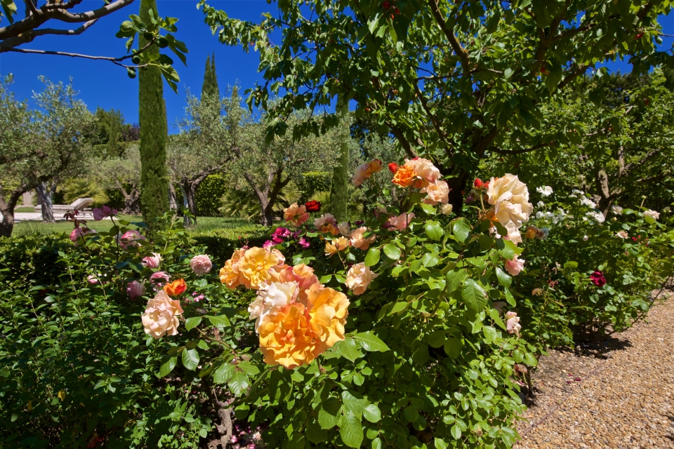 Photo number 47 of Mas la Closerie