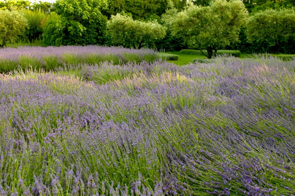 Photo number 06 of Mas la Closerie