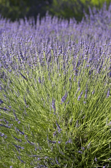 Photo number 77 of Mas la Closerie