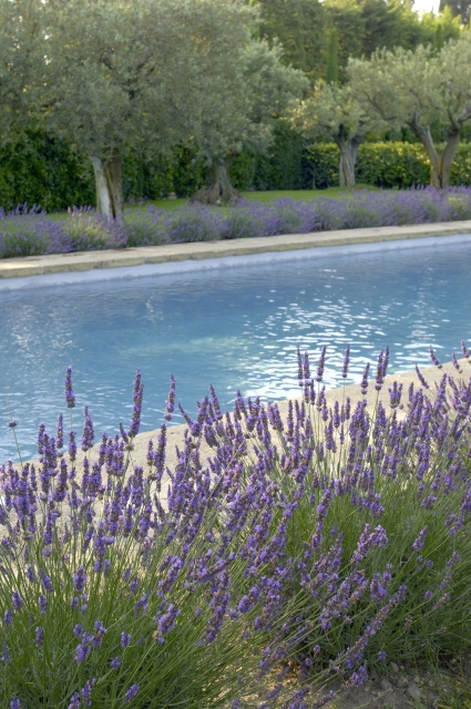 Photo number 48 of Mas la Closerie